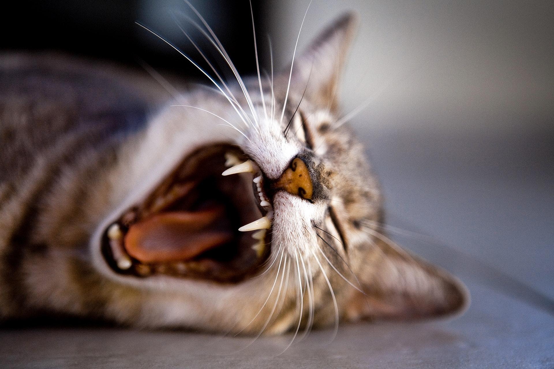 cat pest control